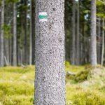 krenek michal, šumava horská kvilda a okolí