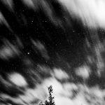 krenek michal fotograf, radotín biotop praha, vrba