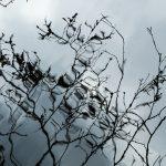 křenek michal, šumava, makrobjektiv, 100mm macro, Cyril Sauvage, Boubín, Javorník, Poledník, Fotograf , mechy,kapradí houby, listy
