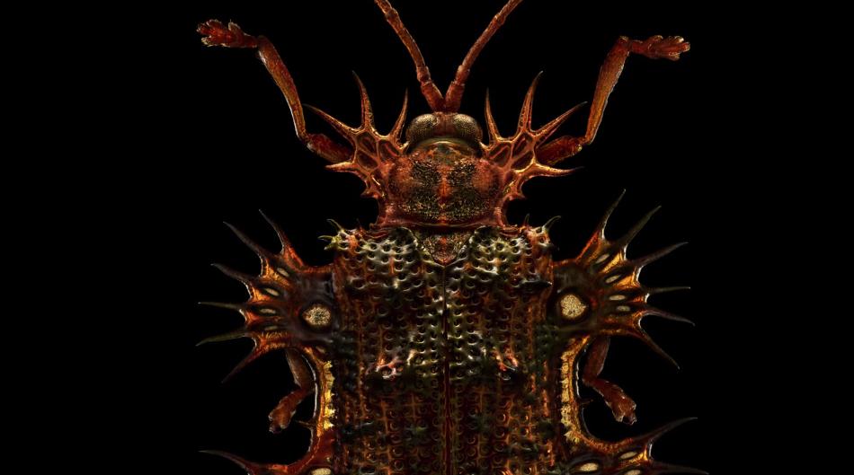 Dokonalé snímky makra, fotit hmyz