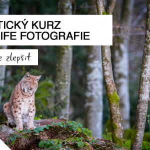focení zvířat, wildlife, kurz, workshop, árek pro fotografa, šumava, focení, bavorský les, václav křížek, fotografický kurz, nejlepší cena, sleva