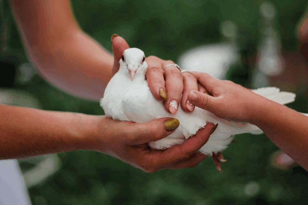poštovní holubi, svatba, milevsko, , klášter, vesnická svatba, dražka, svatební fotograf nej, krenek,